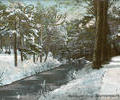 Branksome Chine under snow